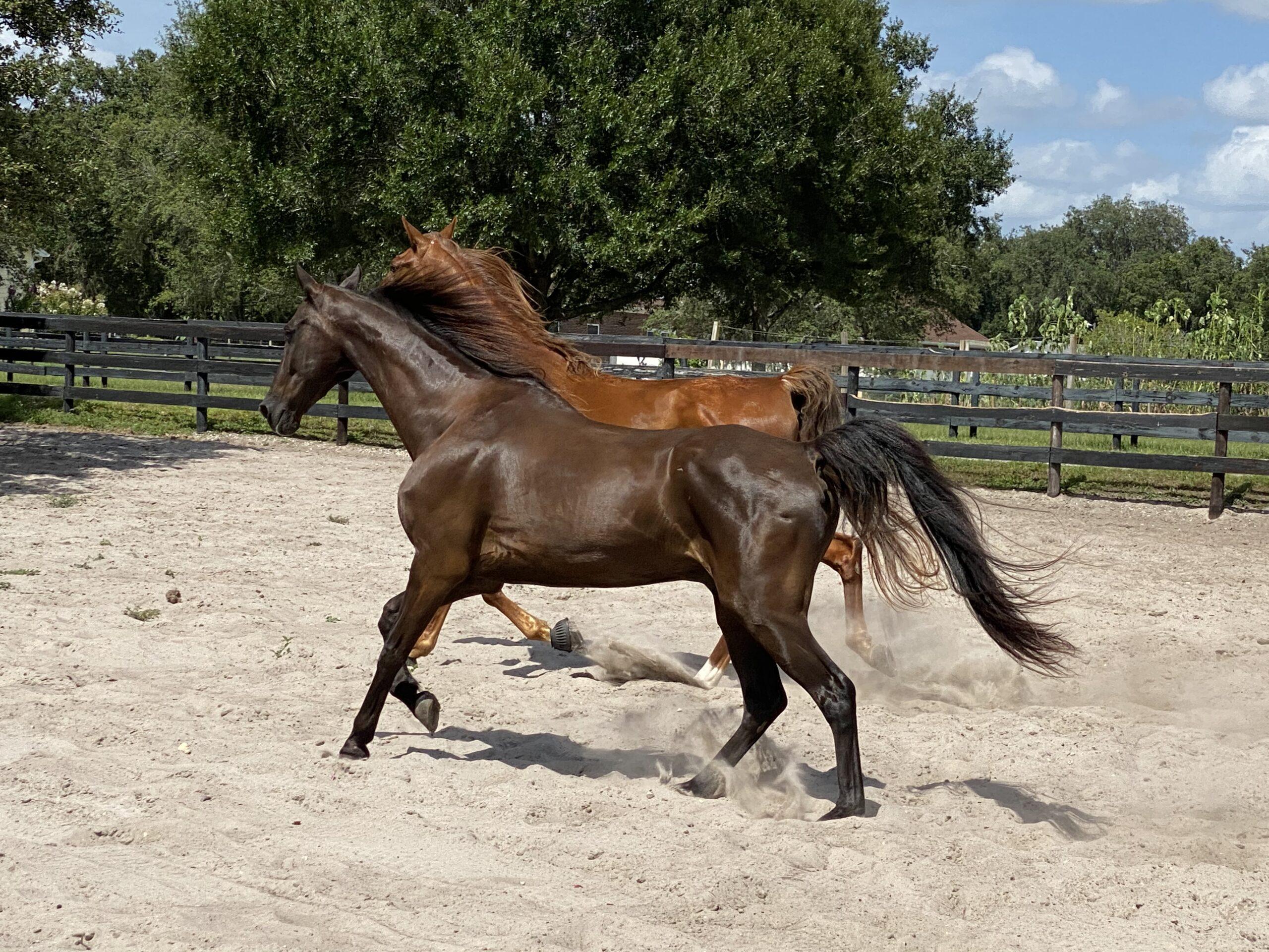 Licciardello Horse Stables