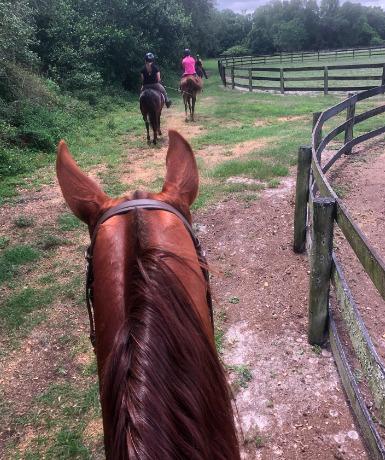 Trail Riding at Licciardello Stables
