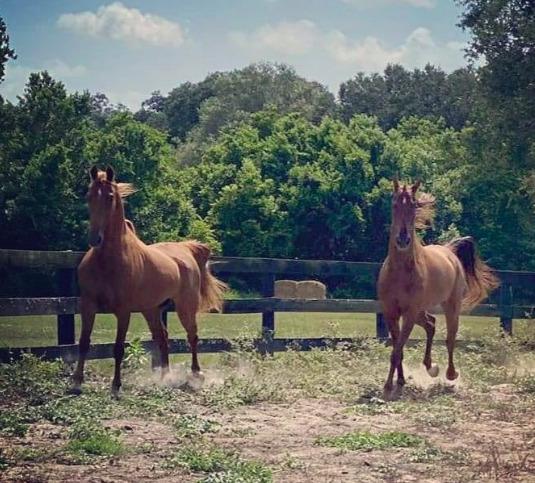 Board Your Horse at Licciardello Stables